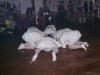 2. maškarní ples 2012