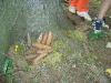 zs-zacatek-2009-2010-ve-skolni-druzine-sehradice-017