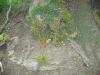 zs-zacatek-2009-2010-ve-skolni-druzine-sehradice-018