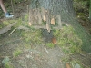zs-zacatek-2009-2010-ve-skolni-druzine-sehradice-021